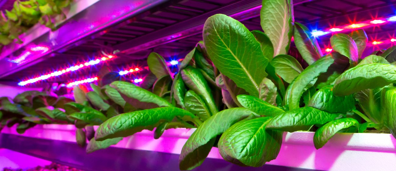 Vertical Farming and Bradbrook Consulting