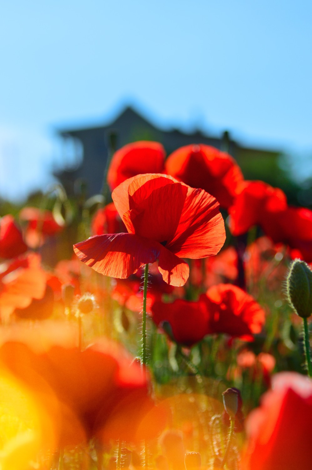 Remembrance Day 2019 – Lest we Forget